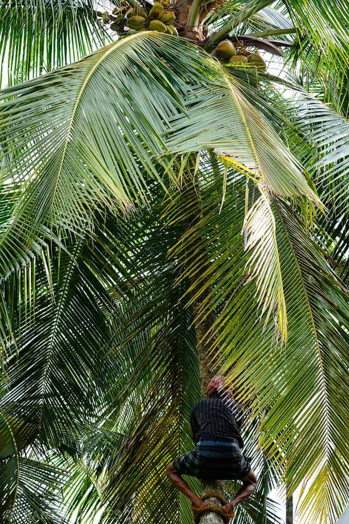 Coconut_101_DSC2686