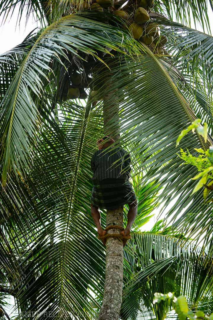 Coconut_101_DSC2689